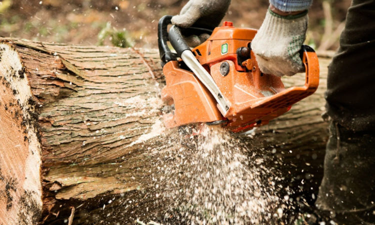 Best Chainsaws Reviews