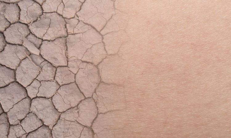 Best Moisturizing Body Washes For Dry Skin