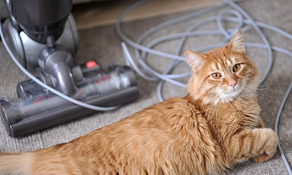Best Vacuum For Pet Hair 2020.Top 3 Best Rechargeable Upright Vacuum For Pet Hair Reviews